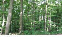 Stručne radionice o mogućnostima korištenja sredstava iz Europskog poljoprivrednog fonda za ruralni razvoj u šumarstvu i drvnoj industriji