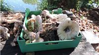 Izložba gljiva u Parku prirode Papuk