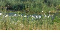 Od Drave do Papuka – promatrajte ptice u Virovitičko-podravskoj županiji
