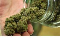 U pretrazi pronađeno 480 grama marihuane
