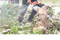 Pronađeni kradljivci drva iz šumskog predijela Travin potok