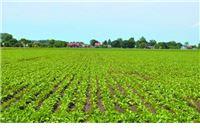Slovenski seljaci siju šećernu repu za Viro