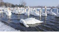 Virus ptičje gripe potvrđen je i na jezeru Šoderici, izletnike upozoravaju da ne prilaze