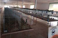 Prazni kavezi u Opecu - zbog ptičje gripe zabranjena Izložba malih životinja