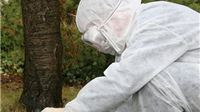U Virovitici kraj dvorca utvrđen virus H5N8