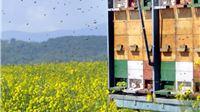 Pomoć pčelarima - šećer za prihranu pčela