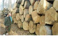 Poduzetnici u šumartsvi i sjeći drva iskazali neto dobit od 229 milijuna kuna