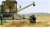 Stiže pravilnik o klasama u otkupu roda pšenice 2017.