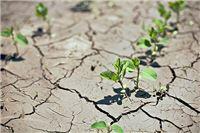 Na području općina Suhopolje, Lukač i Gradina procijenjena šteta od suše 47, 5 milijuna kuna