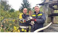 Vatrogasci iz bunara spasili mačku