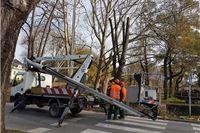 Zbog sječe stabala na obodu parka zatvoren promet