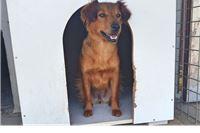 Kujica Suzy: Tražim toplu ljudsku ruku, svi psi s vremenom odlaze iz skloništa, a ja ostajem