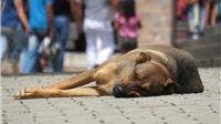 S obzirom na kratak rok prema Zakonu o zaštiti životinja u nekim lokalnim zajednicama već krenula   Kontrola mikročipiranja pasa