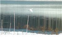Zimske razglednice sa Slanca
