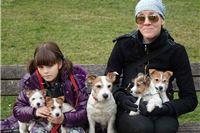 Kupite čistokrvne štence oštrodlakog Jack Russell Terriera, pomozite Luki da ode u košarkaški NBA kamp na Floridu