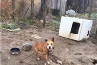 Užas u Bistrici kod Slatine: izgladnjele i žedne pse  pit bull terijera čuvaju u nehumanim uvjetima