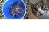 Europskom parlamentu predstavljen prijedlog  o obaveznoj sterilizaciji pasa i mačaka