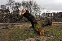 Ispunite anketu o percepciji uloge urbanih stabala u prostoru. U kontekstu prekomjernog rušenja stabala vrlo zanimljiva pitanja.