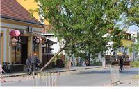 Umalo tragedija u Bečkoj - samo je sreća spasila gospođu koja je prelazila cestu u trenutku kad je stablo počelo padati