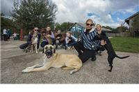 Do sredine lipnja 2018. je udomljeno 110 pasa