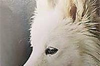 Max pronađen u Okrugljači, za Tonkicom se još traga