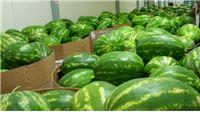 Nepogode i uvoz uništavaju proizvodnju voća i povrća
