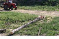 Ako ste mislili da je rušenju u parku došao kraj prevarili ste se - jutros je ubijeno još jedno drvo