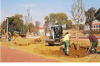 Na devastiranom dijelu Gradskog parka ispred Gimnazije  posađene nove sadnice ...