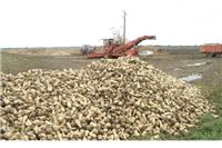Cijena šećera na najnižoj razini u posljednjih 12 godina, urožena proizvodnja ...