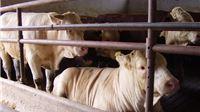 Ministarstvo poljoprivrede: Ukinuli smo 190 troškova koje su stočari do sada plaćali državi  - 17,2 milijuna kuna godišnje uštede
