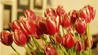 Poziv u Split na državno prvenstvo cvjećara