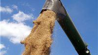 Donesen Pravilnik o ugovornim odnosima pri otkupu pšenice