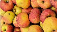 Pravilnik o dodjeli 20 milijuna kuna potpore proizvođačima jabuka u e-savjetovanju