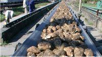 Tri šećerane objedinjene u Hrvatsku industriju šećera