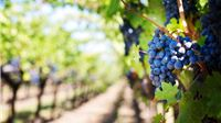 Rezultati poslovanja poduzetnika u djelatnosti proizvodnje vina i uzgoja grožđa u 2018. godini