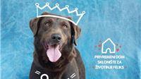 Fotografirajte se s kućnim ljubimcem, donirajte Skloništu za napuštene životinje
