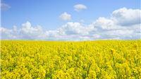 Dodatnih 43 milijuna kuna za osiguranje usjeva, životinja i biljaka