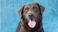 Pas Sani iz virovitičkog skloništa ima šanse postati naj šapa Hrvatske i tako zastupati prava napuštenih životinja. Glasajte!