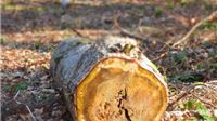 Krenulo je otpuštanje radnika! Koronavirus ozbiljno narušava poslove u drvoprerađivačkom sektoru