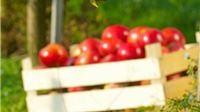 HSS pozvao da se organizira interventni otkup poljoprivrednih proizvoda