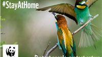 WWF: Zeleni plan Europske komisije je dobar, no hoće li ga države članice aktivno provesti?