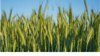 Ministarstvo poljoprivrede pozvalo zainteresirane da se uključe u kreiranje baze projekata za financiranje iz fondova EU