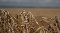 Na adrese 235 poljoprivrednika poslani novi ugovori vrijedni gotovo 38 milijuna kuna