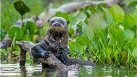IZVJEŠTAJ O STANJU PLANETA 2020.  Populacije divljih vrsta od 1970. godine u prosjeku smanjene za dvije trećine