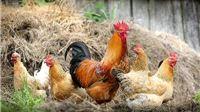 Pojava visoko patogene influence ptica u državama članicama EU