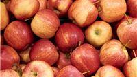 Program potpore primarnim poljoprivrednim proizvođačima vrijedan 70 milijuna kuna u postupku elektronskog savjetovanja