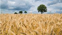 Novim Zakonom o sjemenu sigurniji identitet materijala i bolji nadzor uvoza