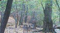 Na području Parka prirode Parka nakon više od 60 godina pojavio se vuk
