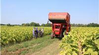 Za iznimno osjetljive sektore u poljoprivredi  121 milijun kuna