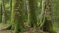 Bez odgovornog odnosa prema prirodi ne možemo očuvati zdravlje